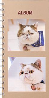 ぶさかわ猫ちゃんのアルバム1