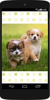 スマホの中に芝生を駆ける2匹の子犬32 (犬)