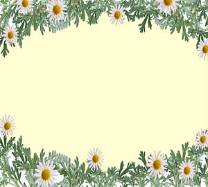 白色のマーガレットの花のフレーム3