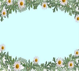 白色のマーガレットの花のフレーム4