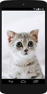 スマホの中に目をまんまるにした子猫79