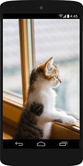 スマホの中に窓から外を眺めている子猫78