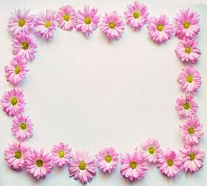 ピンク色のデイジーの花のフレーム