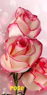 花~バラ/薔薇/ばら