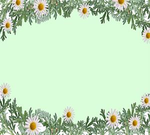 白色のマーガレットの花のフレーム2