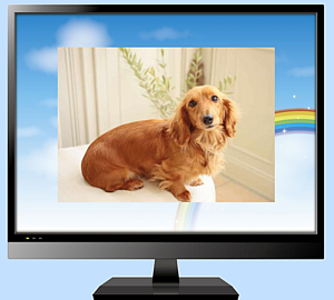 パソコンの画面~ダックスフンド3 (犬)