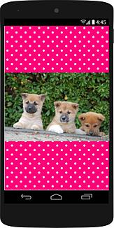 スマホの中に3匹の柴犬の子犬37 (犬)