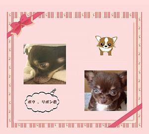 チワワ&赤リボンフレーム (犬) リボン