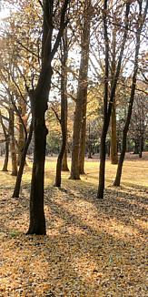 散歩道~木漏れ日~