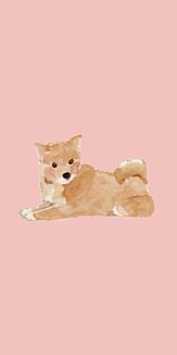 shibainu/ピンク