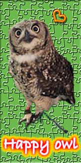 Happy owl3
