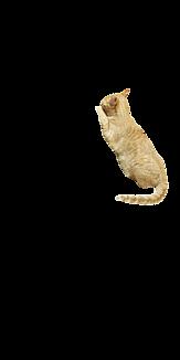 もぐもぐ猫