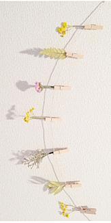 花 ドライフラワー