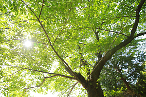 緑いっぱい【手帳】