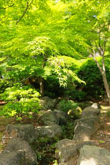 新緑の癒し【ケースフレーム】