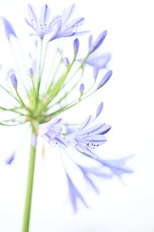 愛の花【ケースフレーム】