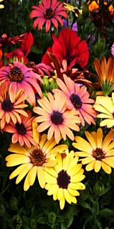 flower ビビット