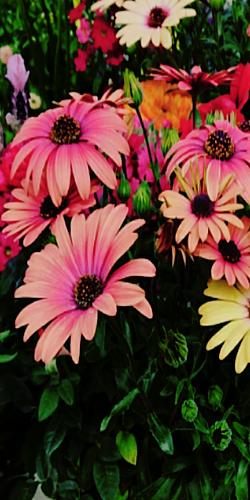 flower トロピカル
