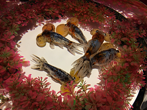 ★僕も金魚★01