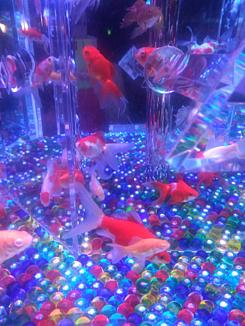 ★金魚とビー玉★01