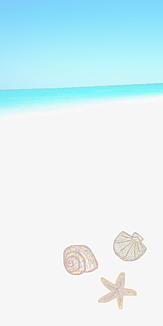 夏の浜辺のヒトデや貝と