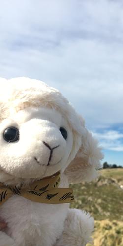 キュートな羊
