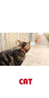 CAT(猫)