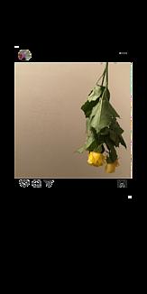 インスタ風ケース ドライフラワー iPhone7・8