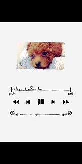 Now playing(プードル)