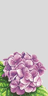 紫陽花 グレー