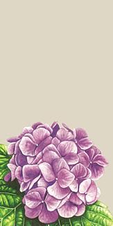 紫陽花 ベージュ系