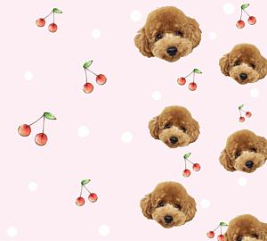 犬のトイプードル ピンクのさくらんぼ