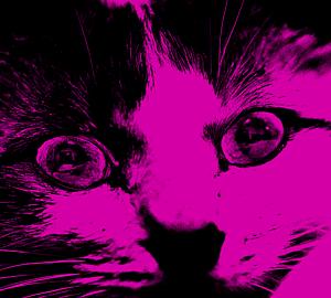 Pink cat ピンクのはんがねこ