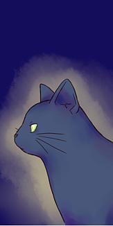 黒猫 ケース