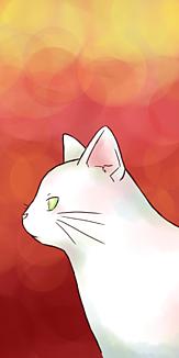 白猫 赤 ケース