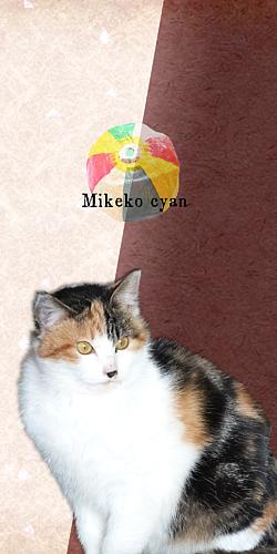 かわいい三毛子ちゃん-紙風船- ブラウン