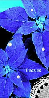 葉 ブルー