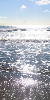 海:ケース