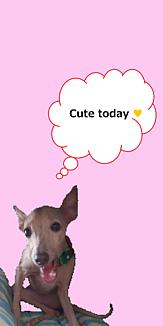しゃべる犬