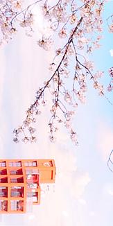 落合公園と桜