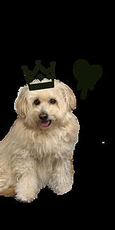 SORA DOG