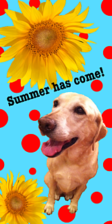夏が来た!犬