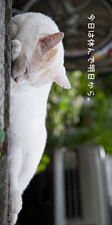 【野良猫】川越で昼寝していた猫