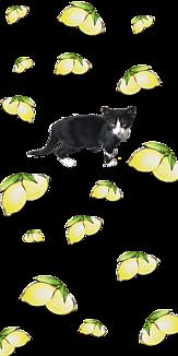 レモンの中の猫