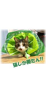 Cat-8(文字入り)