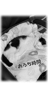 Cat-16(文字入り)