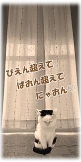 Cat-11(文字入り)