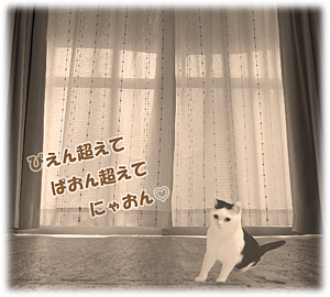 Cat-3(文字入り)
