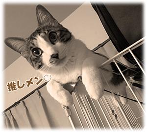 Cat-9(文字入り)