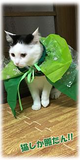Cat-7(文字入り)